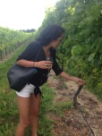 Looking at the grapes. I tried one and it was extremely sour.