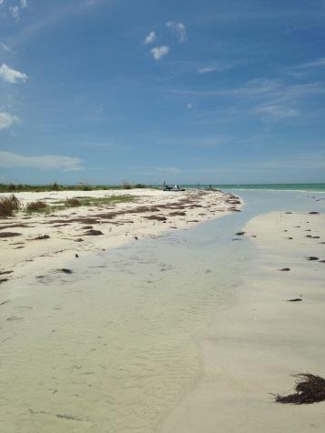 The beach on Caladesi Island