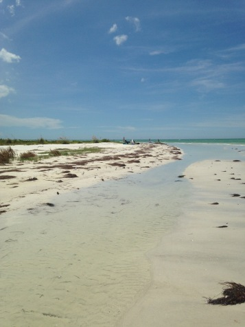 The beach on Caladesi Island